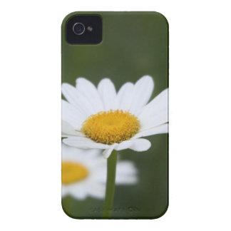 Caso de la margarita de Shasta iPhone 4 Carcasa