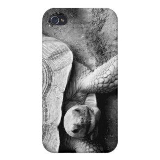 Caso de la tortuga iPhone 4 cárcasa