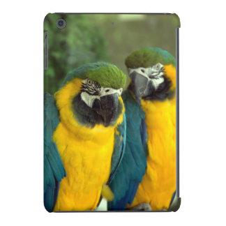 Caso de los Macaws del azul y del oro Fundas De iPad Mini