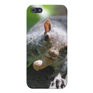 Caso de nuez del iPhone 4 de la ardilla iPhone 5 Protector