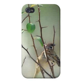 Caso de reclinación del iPhone de los pájaros iPhone 4 Funda