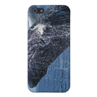 Caso de salto del iPhone 4 de la ballena jorobada iPhone 5 Protector