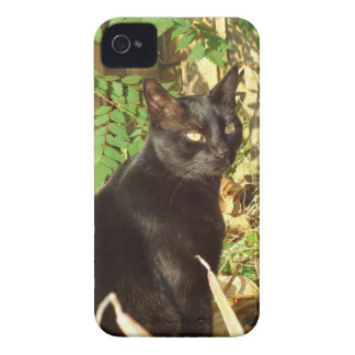 Caso de Sun de la mañana del gato negro iPhone 4 Case-Mate Cobertura