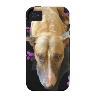 Caso del ambiente del iPhone 4/4s de bull terrier  Case-Mate iPhone 4 Carcasas