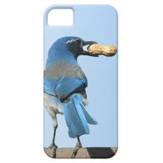 Caso del arrendajo azul del iPhone lindo 5 del iPhone 5 Fundas