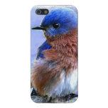 CASO DEL BLUEBIRD IPHONE 5 iPhone 5 FUNDAS
