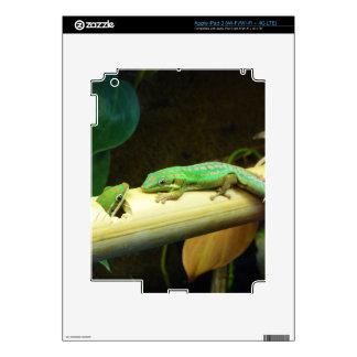 Caso del iPad 3 del amor del Gecko iPad 3 Pegatinas Skins