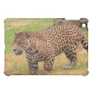 Caso del iPad de Jaguar