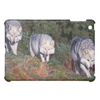 Caso del iPad de los lobos