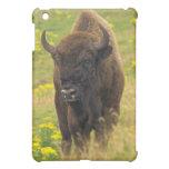 Caso del iPad del bisonte