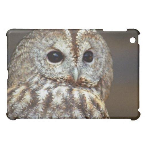 Caso del iPad del búho de Brown