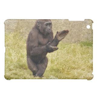 Caso del iPad del chimpancé
