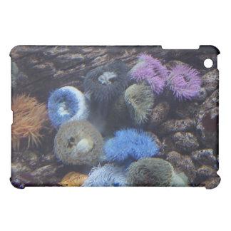 Caso del iPad del esplendor HD del océano - arreci