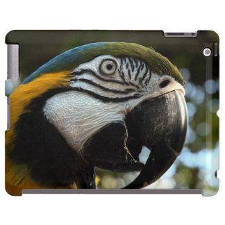 Caso del iPad del Macaw del azul y del oro Funda Para iPad