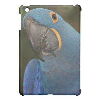 Caso del iPad del Macaw del jacinto mini