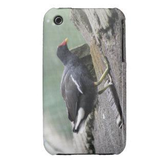 Caso del iPhone 3 de la polla de agua iPhone 3 Cárcasa