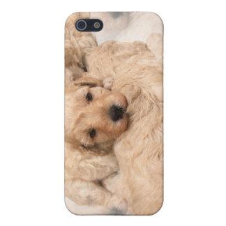 Caso del iPhone 3G del collage del perrito del gol iPhone 5 Carcasas