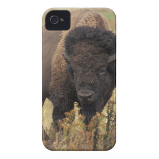 Caso del iPhone 4/4S Barely There del bisonte Funda Para iPhone 4