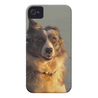Caso del iPhone 4 4S Barely There del perro del bo iPhone 4 Cárcasa