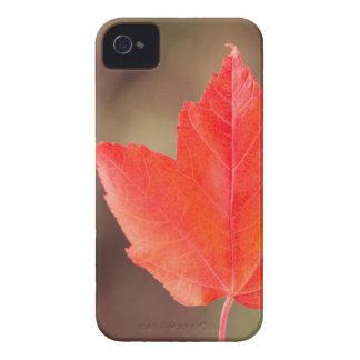 Caso del iPhone 4/4S de la hoja de arce iPhone 4 Case-Mate Fundas