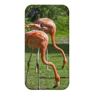 Caso del iPhone 4/4S de los flamencos iPhone 4/4S Carcasa