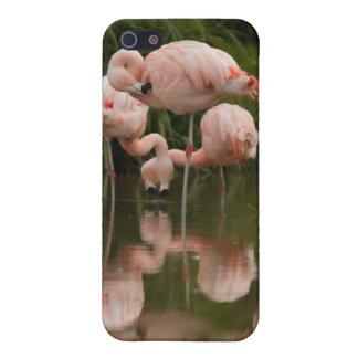 Caso del iPhone 4/4S de los flamencos iPhone 5 Protector