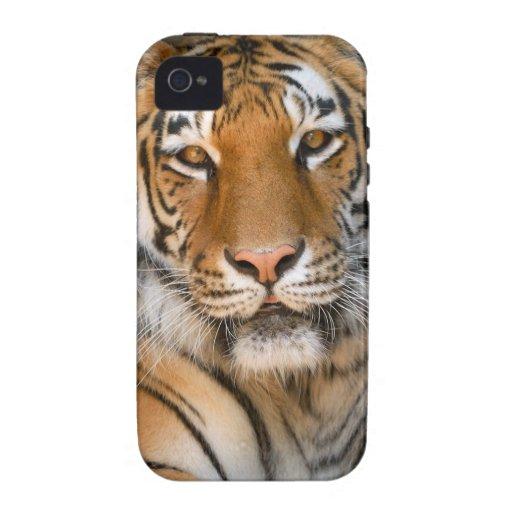 Caso del iPhone 4/4S del tigre de Bengala Vibe iPhone 4 Carcasas