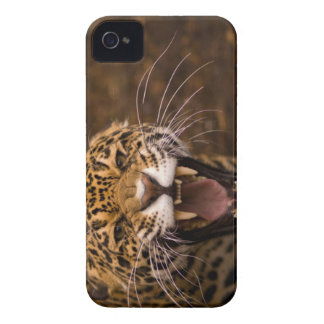 caso del iPhone 4 4S Jaguar iPhone 4 Case-Mate Cárcasas