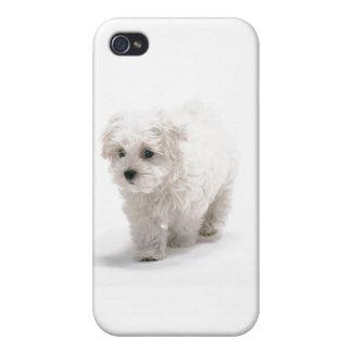 Caso del iPhone 4 de Bichon Frise iPhone 4 Fundas