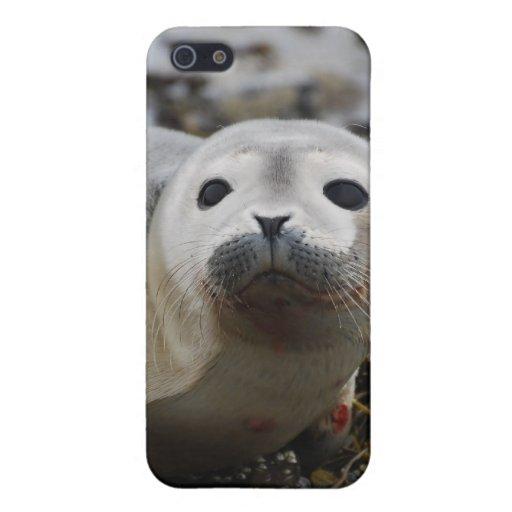 Caso del iPhone 4 de cría de foca iPhone 5 Funda