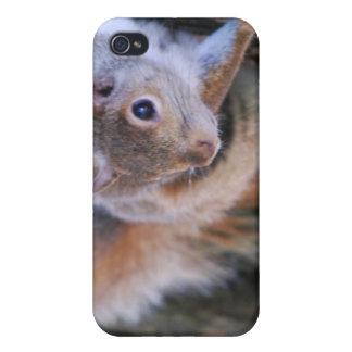 Caso del iPhone 4 de la ardilla de árbol iPhone 4/4S Carcasa