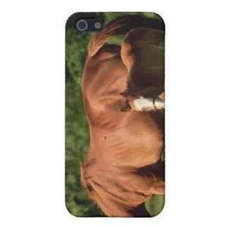 Caso del iPhone 4 de la familia del caballo iPhone 5 Carcasas