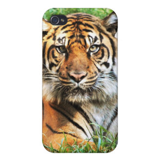 Caso del iPhone 4 de la fotografía del tigre de Be iPhone 4/4S Funda