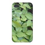 Caso del iPhone 4 de la hiedra venenosa
