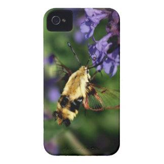 Caso del iPhone 4 de la polilla de colibrí iPhone 4 Protectores