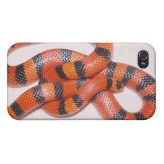 Caso del iPhone 4 de la serpiente de leche del Hon iPhone 4/4S Carcasa