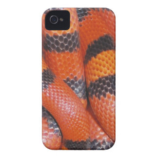 Caso del iPhone 4 de la serpiente de leche del iPhone 4 Cobertura