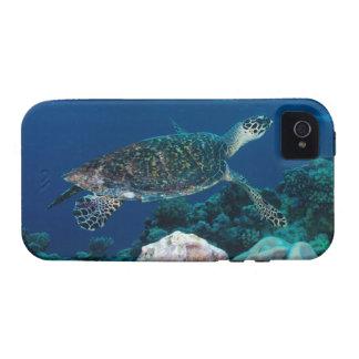 Caso del iPhone 4 de la tortuga de mar Case-Mate iPhone 4 Carcasas