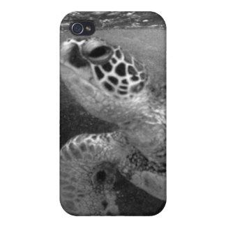 Caso del iphone 4 de la tortuga de mar iPhone 4 protectores