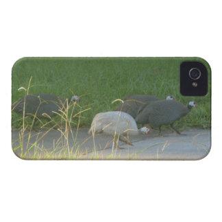 Caso del iphone 4 de las aves de Guinea Case-Mate iPhone 4 Cárcasas