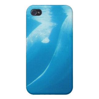Caso del iPhone 4 de las ballenas de la beluga iPhone 4 Cárcasa