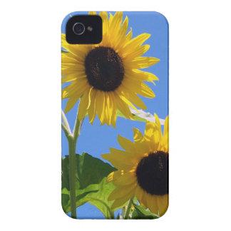 Caso del iPhone 4 de los girasoles del verano iPhone 4 Case-Mate Cárcasas