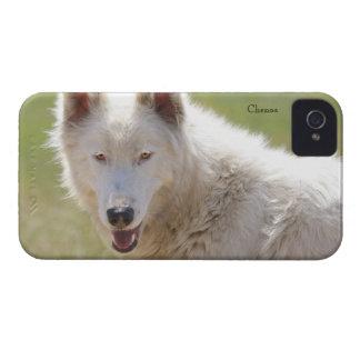 Caso del iPhone 4 de White Wolf iPhone 4 Fundas