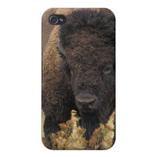 Caso del iPhone 4 del bisonte americano iPhone 4/4S Carcasa