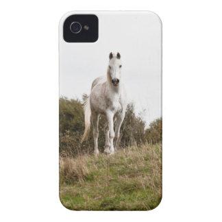 Caso del iPhone 4 del caballo blanco iPhone 4 Case-Mate Protector
