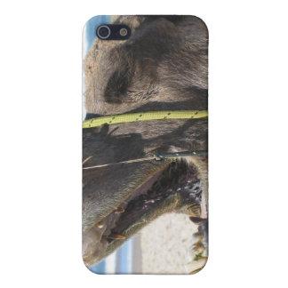 Caso del iPhone 4 del camello del desierto iPhone 5 Cárcasas