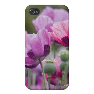 Caso del iPhone 4 del campo de la amapola iPhone 4 Protector