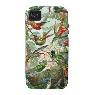 Caso del iPhone 4 del colibrí Vibe iPhone 4 Carcasa