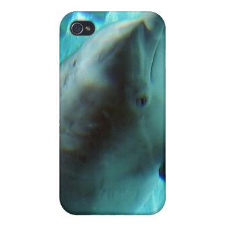 Caso del iPhone 4 del delfín común iPhone 4/4S Carcasas