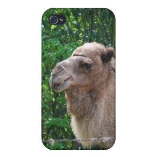 Caso del iPhone 4 del diseño de la foto del camell iPhone 4 Fundas